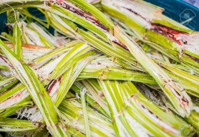 Dimako : Orient's Sugar & Industry veut produire de l'électricité à base des déchets de canne à sucre.